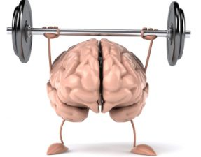 Image of a plastic brain holding up some weights