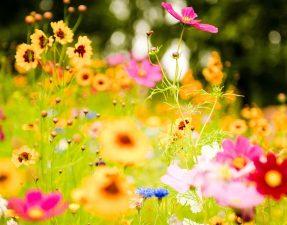 flower-meadow-20392-20902-hd-wallpapers