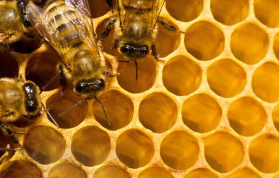 Honey production 1