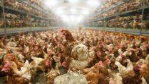 js113944220_keystone_switzerland_bird_flu-large_transgsao8o78rhmzrdxtlqbjdglvjf5wfpqnbzshrl_tozw