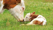 blog_our-predictions-for-farm-animals_122915_facebook