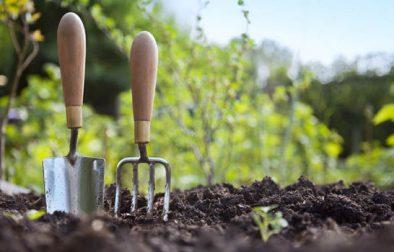 Gardening-817810