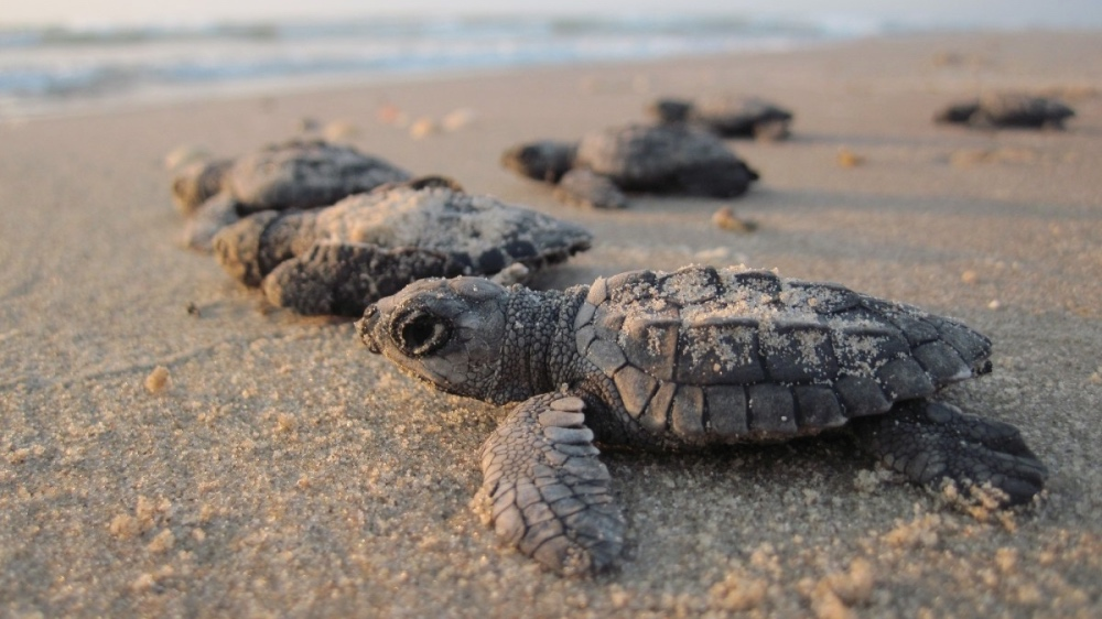 sea-turtles-livekindly-plant-based-news